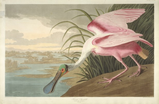 03-the-birds-of-america-plate-321-roseate-spoonbill