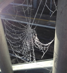 spiderweb_sdeb